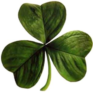 Irish_clover02