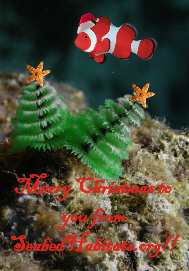 Happy Christmas Tree Worm