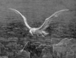 mariner_albatross