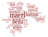 maerl tag cloud