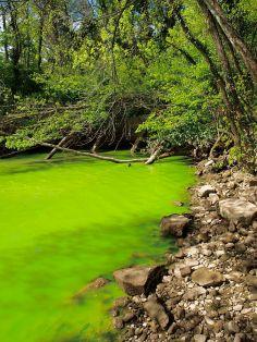 675px-Potomac_green_water